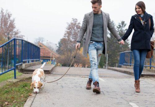 Arnés, collar y correa: La guía definitiva para dar un paseo saludable con tu perro.