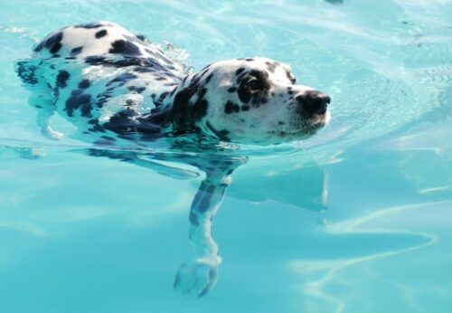 Piscina canina: ¿disfrutar, entrenar o rehabilitar?